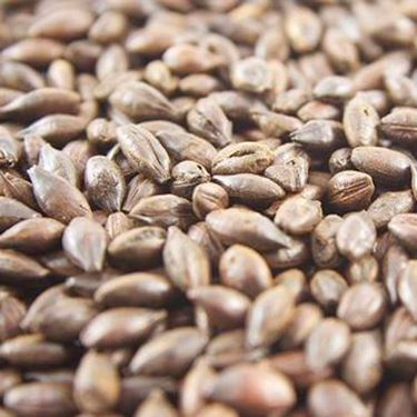 Picture of JW Roasted Barley 10g